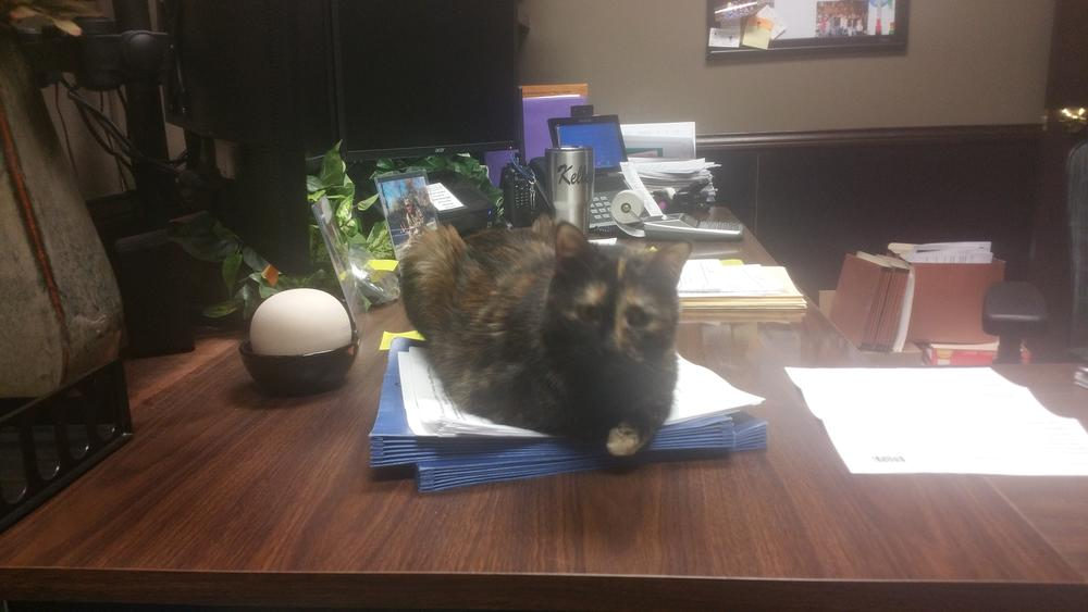 Cornbread the Cat Helping with Payroll